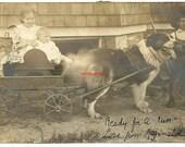 Vintage cart dog Newfoundland large photo postcard kids animal work