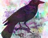 "Poe's Raven - Limited Edition (100) Nature Inspired Watercolor & Pencil Fine Art Stretched Canvas Print 24"" x 36"" by Kenneth Rougeau"