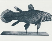 Coelacanth Cast - 60's vintage book clipping