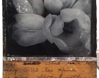Flower Study 020377ae (I'll be Fine)