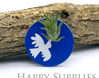 Wearable Tillandsia Plant Jewelry Pendant Art (WTP09)