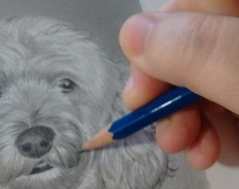 Custom Pet Portrait From Your Photo - 5x7 Original Dog Cat Pencil Sketch Art Drawing From Picture