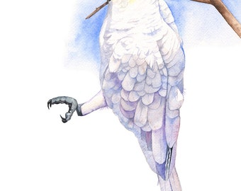 Cockatoo watercolour painting, Australian bird print, A4 size print, C11116, Cockatoo print, Cockatoo painting, Print of watercolor painting