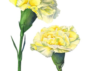 Carnation wall art print, C11716, flower art, Carnation watercolor painting, yellow wall art, 5 by 7 size print, Botanical wall art print