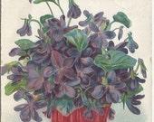 """Basket Full of Purple Violets """"Best Wishes"""" Vintage Postcard"""