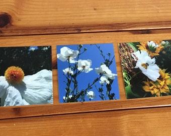 Photos, floral photographs taken in Santa Barbara, CA, art, photo collage, spring, summer, bees, nature photos, home decor, college decor