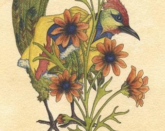 Original Watercolor - Prince Bird