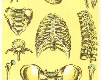 Human Skeleton Medical Anatomy Print 1910s Antique Medical Ephemera Lithograph E J Stanley Wall Decor Yellow Muscle Man