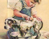 """Art Print, Dog Gets Bath From Little Boy Owner, """"It's SHOWTIME"""" At the Kennel Club RESTORED Vintage Art #328"""