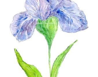 Iris / Greeting card / Blank / Watercolor / Printed in Seattle / Floral / Blue