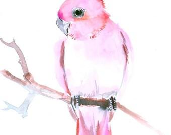 Pink Cickatoo