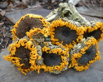 REDUCED Dried Sunflowers, Bunch of 6 Sun Gold Sunflowers, DIY Wedding, Rustic, Country, Autumn Harvest