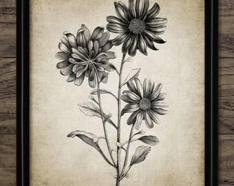 Aster Flower Print - Aster Plant Illustration - Aster Art - Aster - Digital Art - Printable Art - Single Print #244 - INSTANT DOWNLOAD