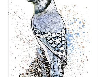 Blue Jay art print - archival print - Bird art - Blue Jay bird modern art print - North American birds  - Wildlife art - Nature print