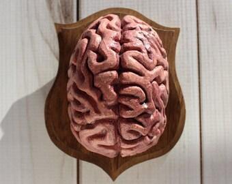 Medium Mounted Brain