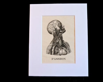 Macabre anatomical illustration of head, chest, heart - passion, curiosity, obscure, oddity, medical, human anatomy