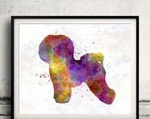 Bichon Frise in watercolor - Fine Art Print Glicee Poster Decor Home Watercolor Gift Illustration dog - SKU 1444