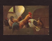 Sleeping chickens and rooster, German painting postcard - Unused, fine art, hens, vintage, antique greeting card - ca 1915 (V6-20)