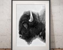 Buffalo Print, Bison Wall Art, Black and White Buffalo, Modern Minimal, Animal Photography, Printable Art, Instant Download, 18 x 24