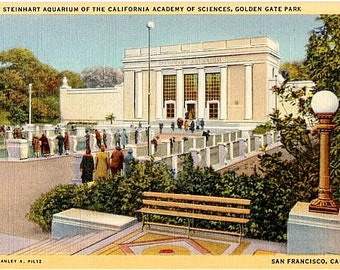 Vintage California Postcard - Steinhart Aquarium at the California Academy of Sciences, San Francisco (Unused)