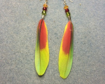 Greenish yellow and red spectacled Amazon feather earrings adorned with green, red and yellow Czech glass beads.