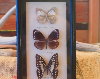 Rare Vintage Butterfly Collection from Bavaria in  Germany