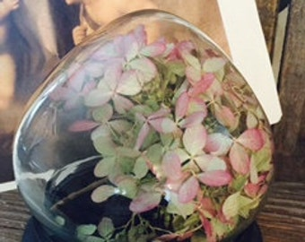 Vintage Glass dome specimen bell jar, with dried pink hydrangeas.
