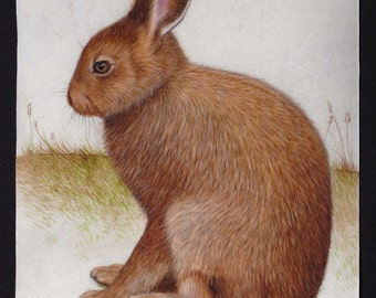 Hare on Calfskin Vellum - Original Watercolour and Gouache Painting