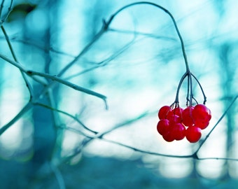 Blue Red Berry Photo, Winter Berry Photo,  Berries Prints, Large Wall Art, Berry on Vine Art Print, Berries on Vine Art, Winter Berries