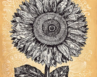 Amazing sunflower in engraving style . Fine art print. Beautiful print for living room or bedroom.