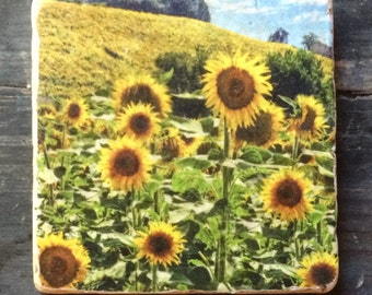 Tuscan Sunflowers Tile