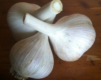 Garlic - 4 varieties 1/2 lb
