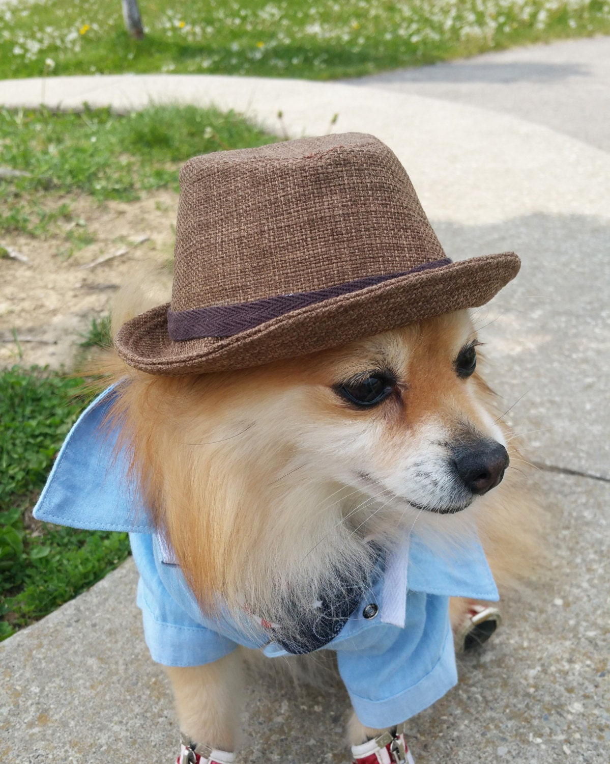 Fedora for DOGS CATS HANDMADE dog hats dog by ...