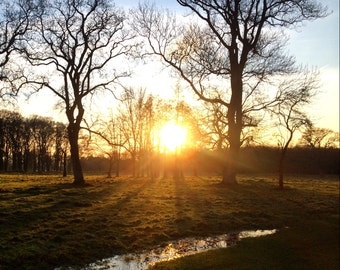 Phoenix Park, Sunset, Dublin, Ireland Photography