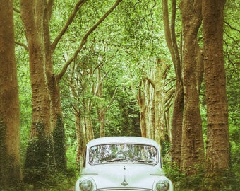 Classic Car Photography, Woodland Art Print, Trees, Vintage Car, Morris Minor Photography - Among Tall Trees
