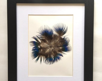 Natural Feather Art. Blue Feather Framed. Iridescent Blue Peacock Feather. Feather Art.