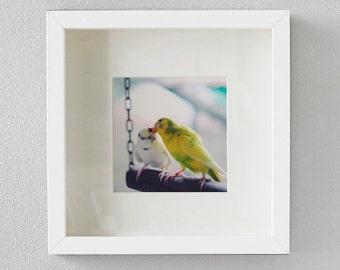 "Photography white frame ""Love Kiss"""