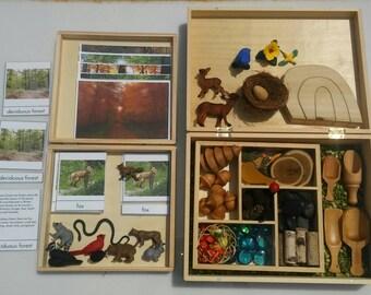 Montessori Deciduous Forest Biome Box and Sensory Bin