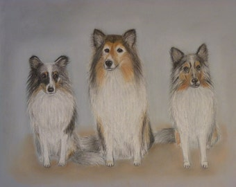 Made to order Shetland Sheepdog Original painting  Shetland painting Pastel painting Dog trend  Painting animal Animals Dog