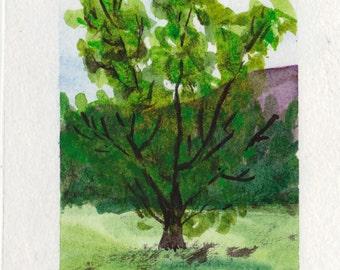Tree - watercolour