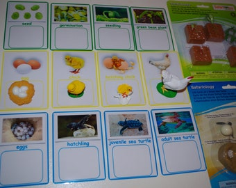 Life Cycle Card-to-Object Matching Activity--Montessori Life Cycle