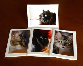 Cat Greeting Photo Cards -- Set of 4 cards