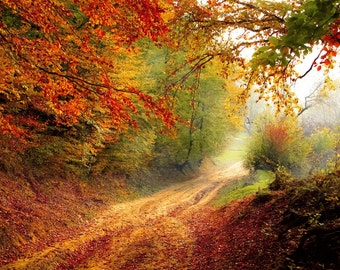 Autumn Tunnel Backdrop Background Trees Fall Leaves Nature Digital