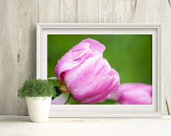 Printable Wall Art, Flower Photograph, Pink Peony Print, Home Decor, Nature Photography, Downloadable Art