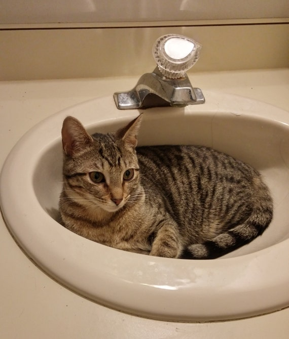 Https Etsy Com Listing 262672209 Cat Photography Funny Bathroom
