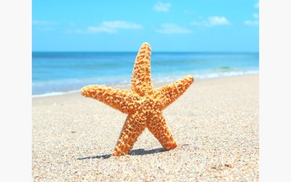 Beach and Starfish Picture, Beach Wall Art, Beach Cottage Decor, Ocean Photograph, Beach Picture, Beach Cottage Wall Art, Ocean Art, Sand