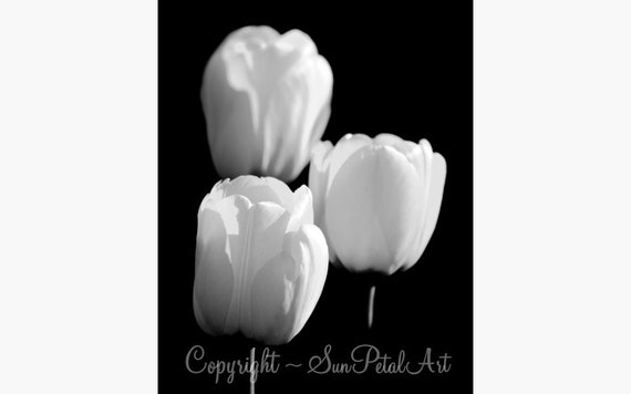 Black and White Wall Art, tulip photograph flower art print BLACK AND WHITE flower photography tulip picture modern art - White Tulips
