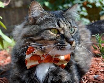 Fall cat bow tie collar, fall cat collar, pumpkin cat collar, cat bow tie, kitten collar, kitten bow tie, cat costume, Thanksgiving cat bow