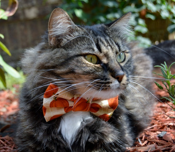 fall cat bow tie