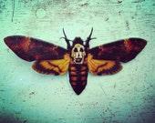 Death Head Moth Pin Button Silence of the Lambs Hannibal